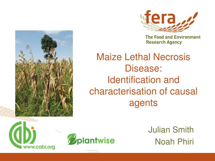 Maize lethal necrosis disease identification and characterisation of causal agents