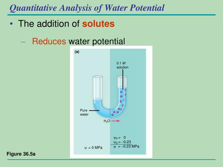 Quantitative Analysis of Water Potential