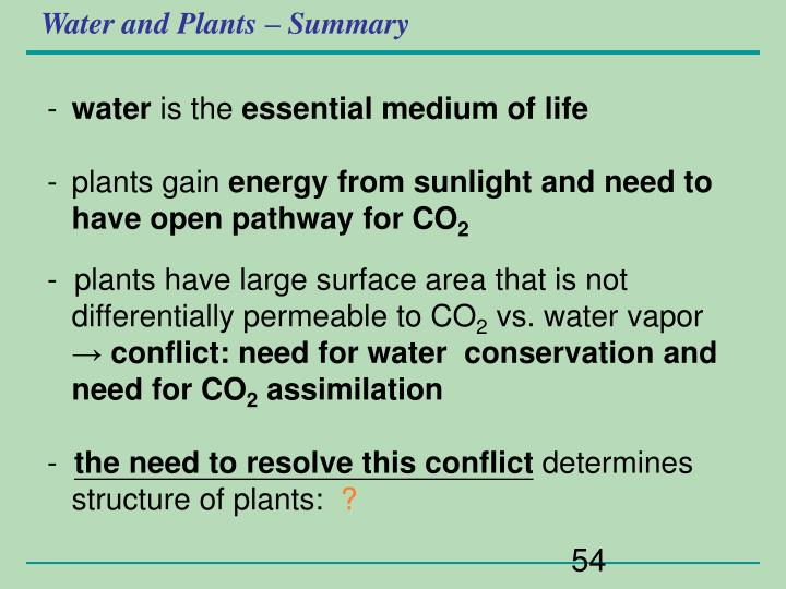 Water and Plants – Summary