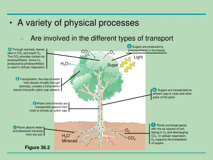A variety of physical processes