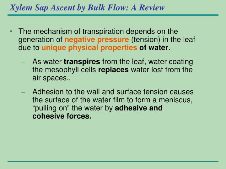 Xylem Sap Ascent by Bulk Flow: A Review