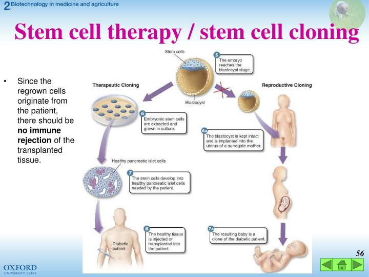 Stem cell therapy / stem cell cloning