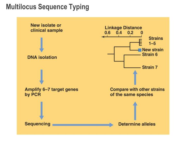 Multilocus Sequence Typing