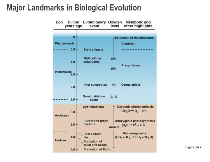 Major Landmarks in Biological Evolution