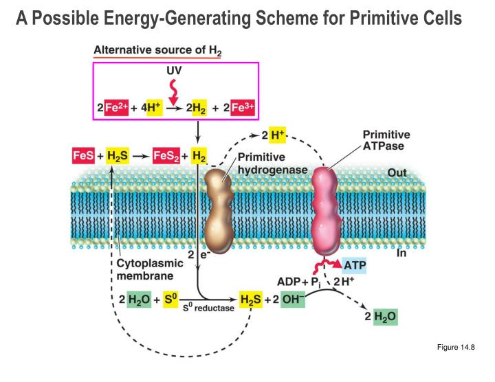 A Possible Energy-Generating Scheme for Primitive Cells