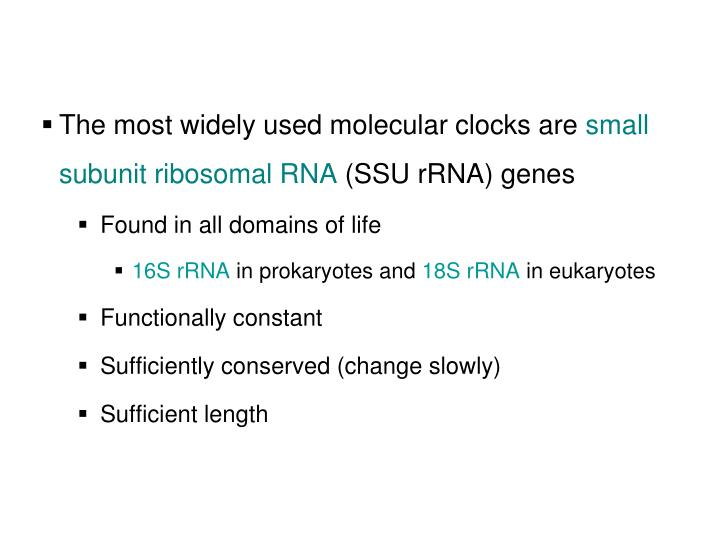 The most widely used molecular clocks are