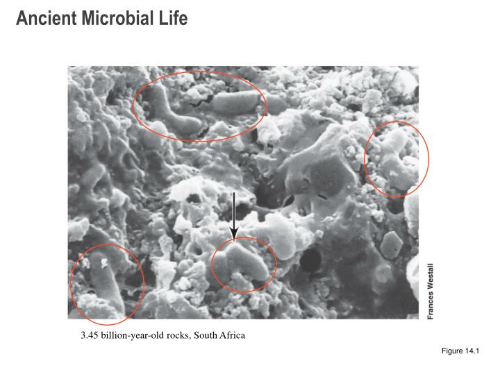 Ancient Microbial Life