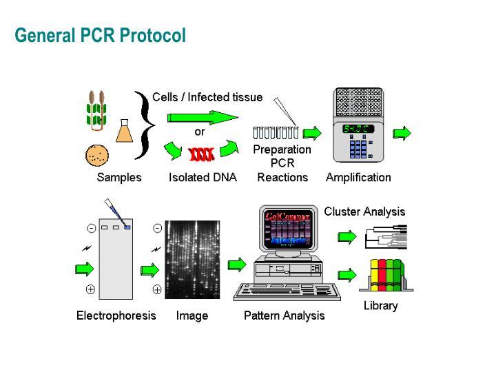 General PCR Protocol