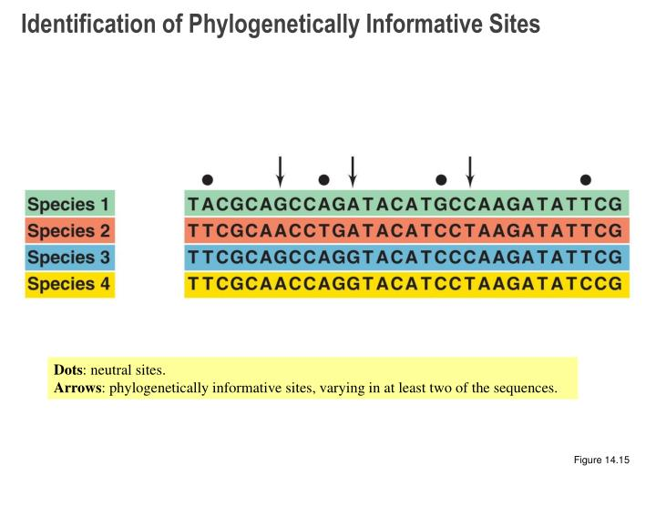 Identification of Phylogenetically Informative Sites