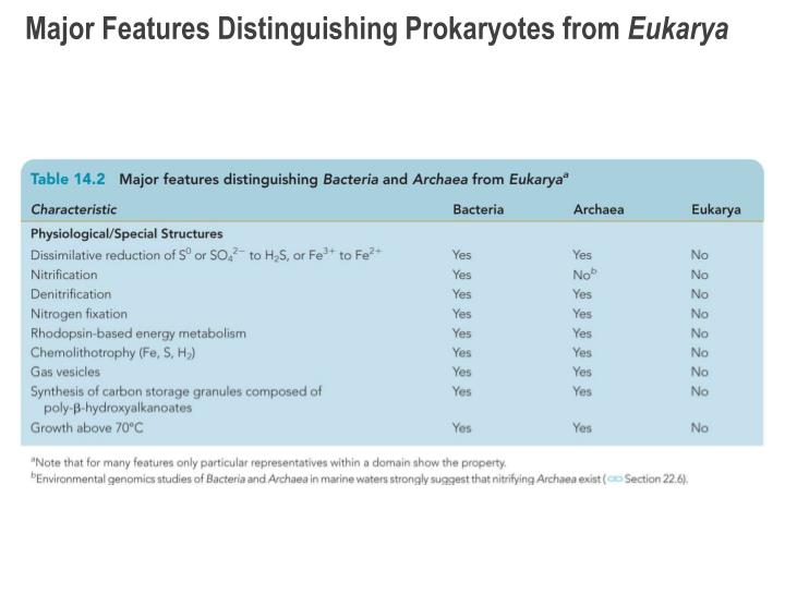 Major Features Distinguishing Prokaryotes from