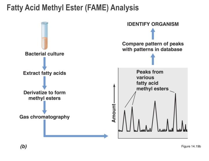 Fatty Acid Methyl Ester (FAME) Analysis