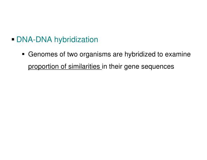 DNA-DNA hybridization