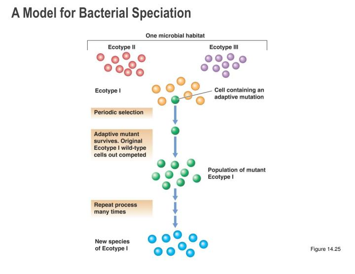 A Model for Bacterial Speciation