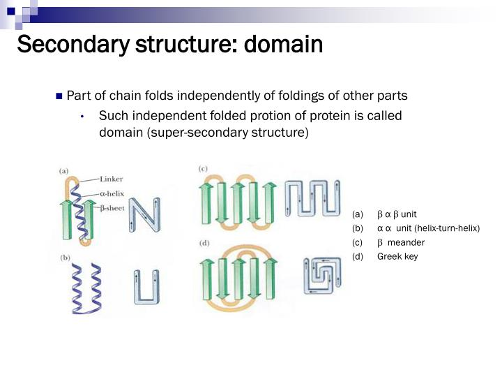 Secondary structure: domain