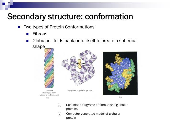Secondary structure: conformation