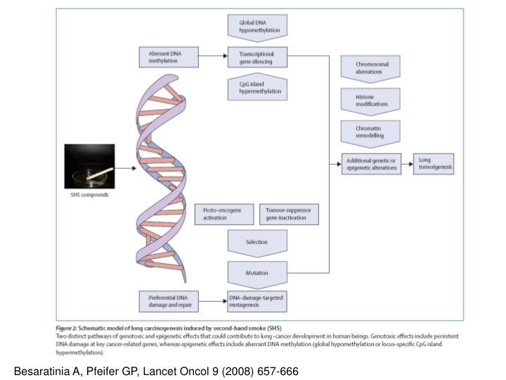 Besaratinia A, Pfeifer GP, Lancet Oncol 9 (2008) 657-666