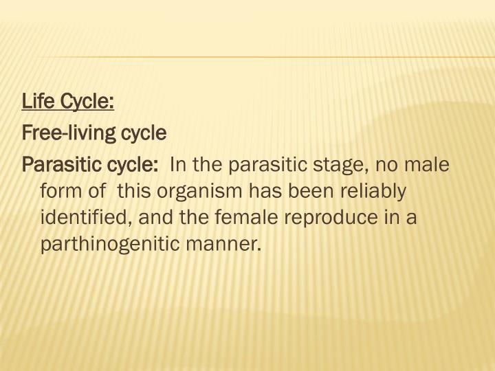 Life Cycle: