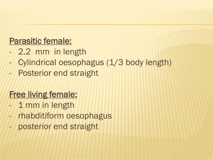 Parasitic female: