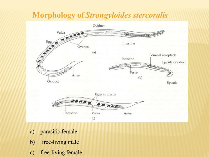 Morphology of