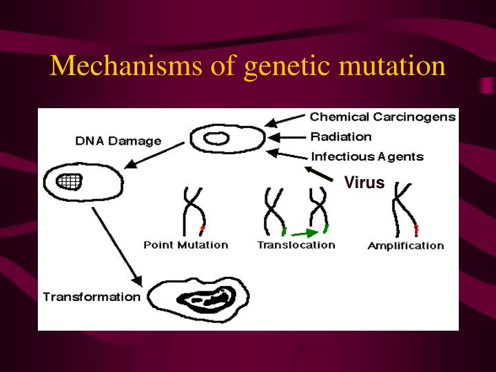 Mechanisms of genetic mutation