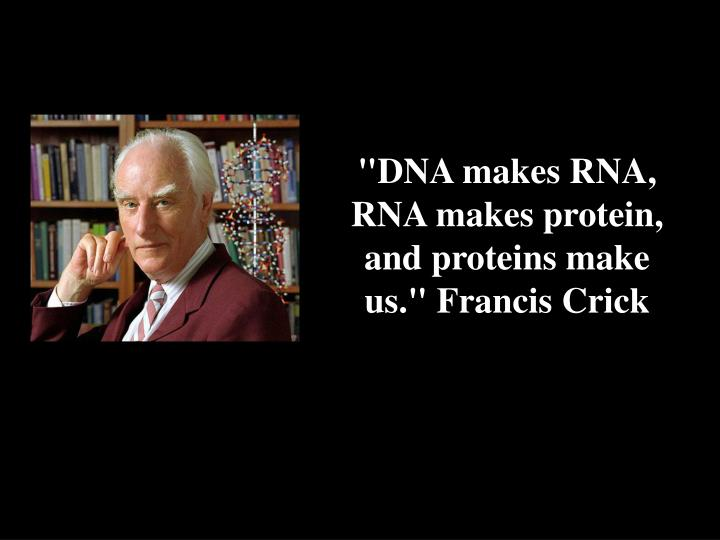 """DNA makes RNA, RNA makes protein, and proteins make us."" Francis Crick"