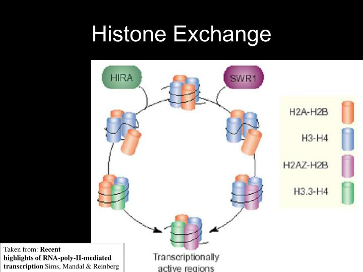 Histone Exchange