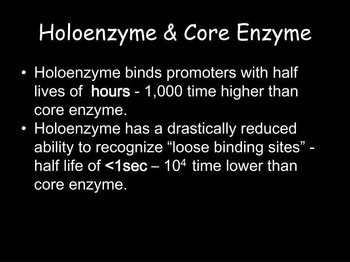 Holoenzyme & Core Enzyme