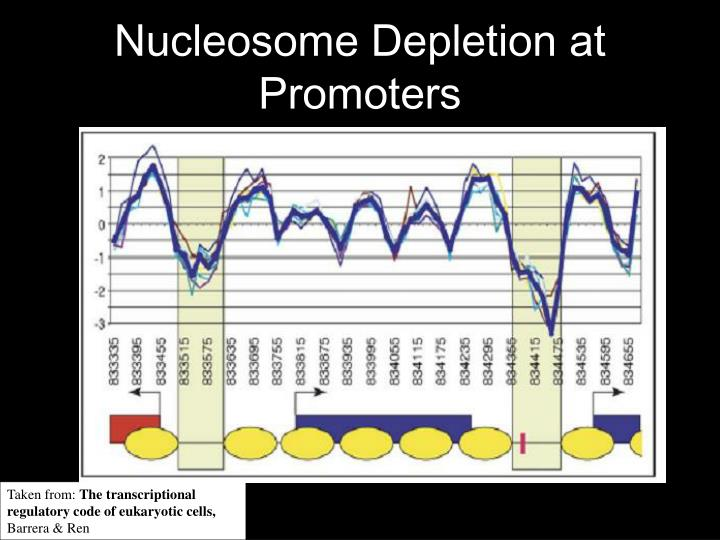 Nucleosome Depletion at Promoters
