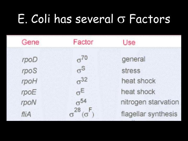E. Coli has several