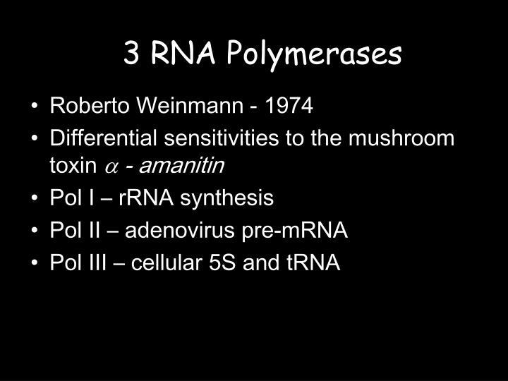 3 RNA Polymerases
