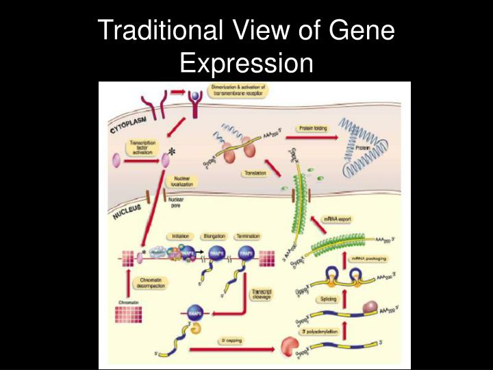 Traditional View of Gene Expression