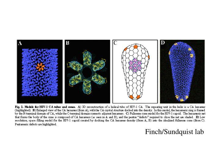 Finch/Sundquist lab