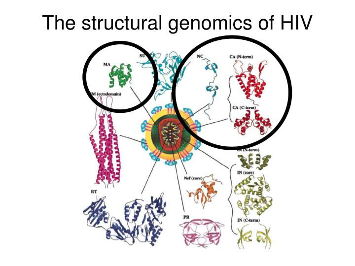 The structural genomics of hiv