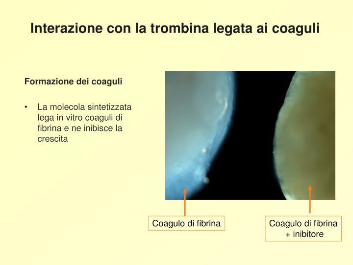 Interazione con la trombina legata ai coaguli