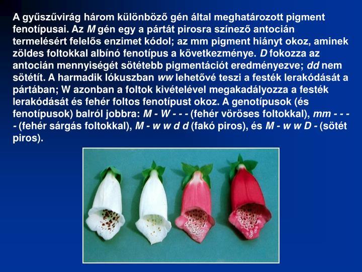 A gyűszűvirág három különböző gén által meghatározott pigment fenotípusai. Az