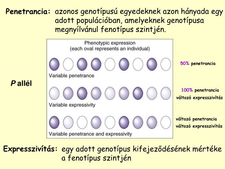 azonos genotípusú egyedeknek az