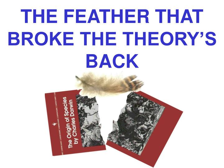 THE FEATHER THAT BROKE THE THEORY'S BACK