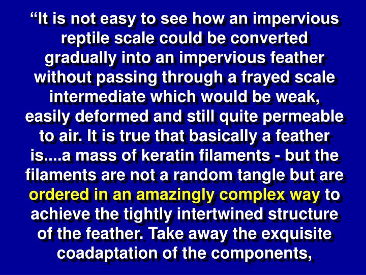 """It is not easy to see how an impervious reptile scale could be converted gradually into an impervious feather without passing through a frayed scale intermediate which would be weak, easily deformed and still quite permeable to air. It is true that basically a feather is....a mass of keratin filaments - but the filaments are not a random tangle but are"