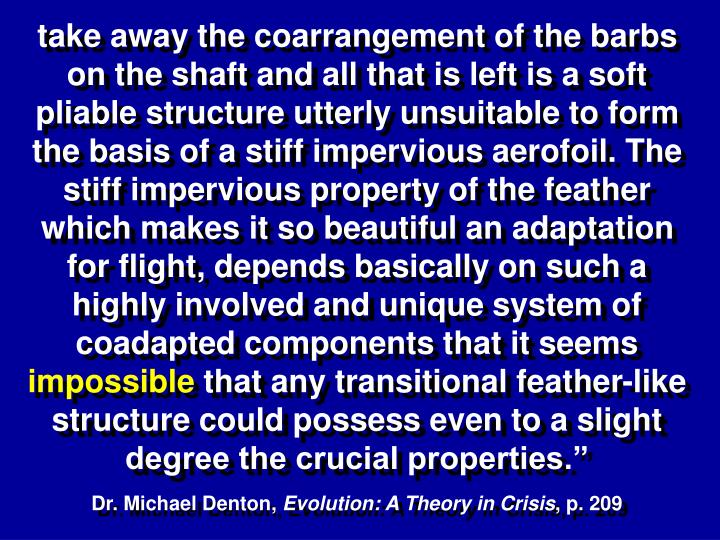 take away the coarrangement of the barbs on the shaft and all that is left is a soft pliable structure utterly unsuitable to form the basis of a stiff impervious aerofoil. The stiff impervious property of the feather which makes it so beautiful an adaptation for flight, depends basically on such a highly involved and unique system of coadapted components that it seems