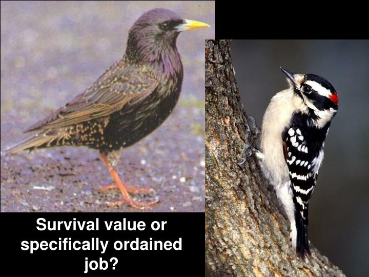 Survival value or specifically ordained job?