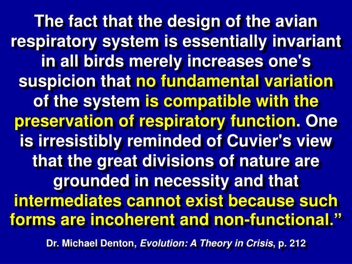 The fact that the design of the avian respiratory system is essentially invariant in all birds merely increases one's suspicion that