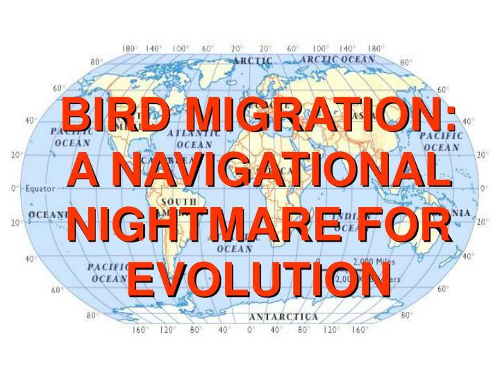BIRD MIGRATION: