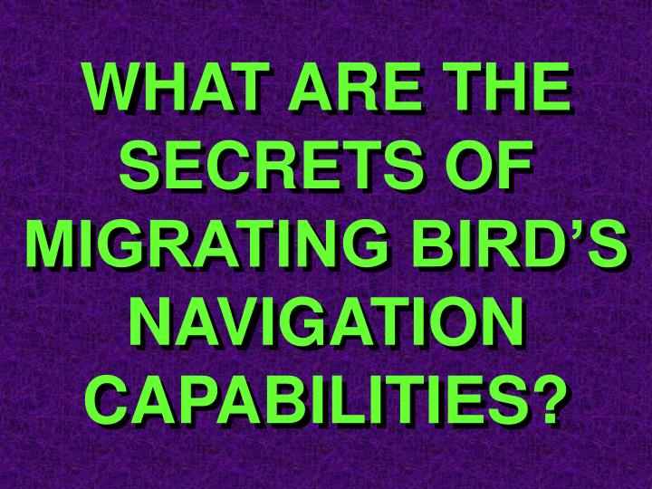 WHAT ARE THE SECRETS OF MIGRATING BIRD'S NAVIGATION CAPABILITIES?