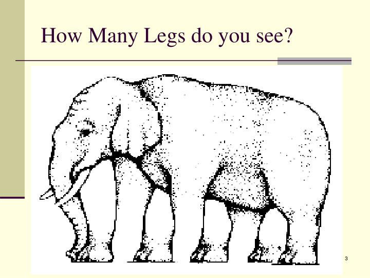 How many legs do you see