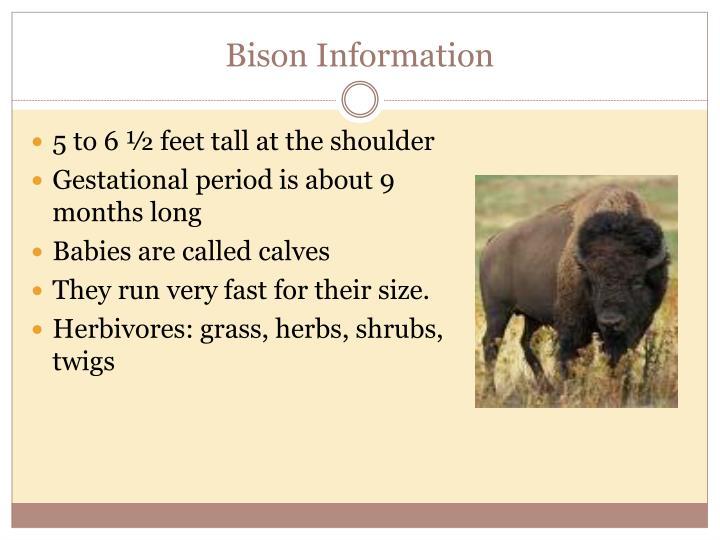 Bison Information