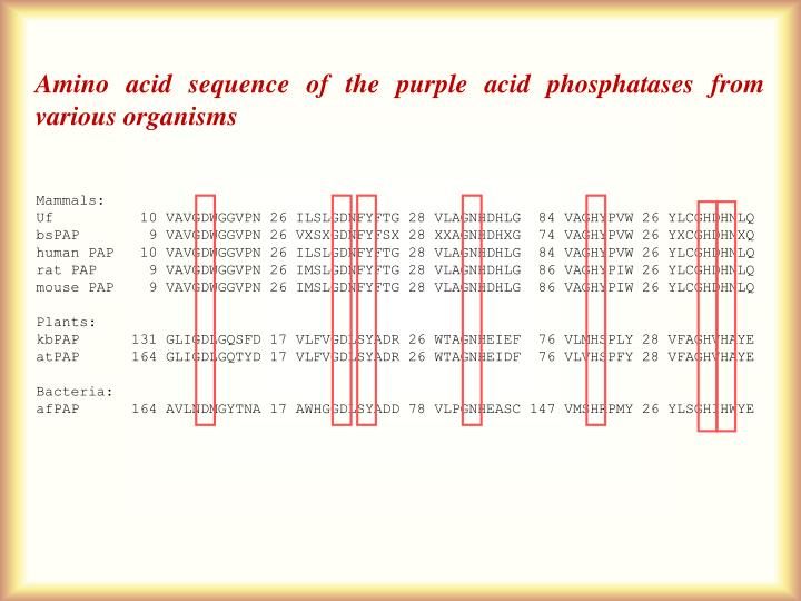 Amino acid sequence of the purple acid phosphatases from various organisms