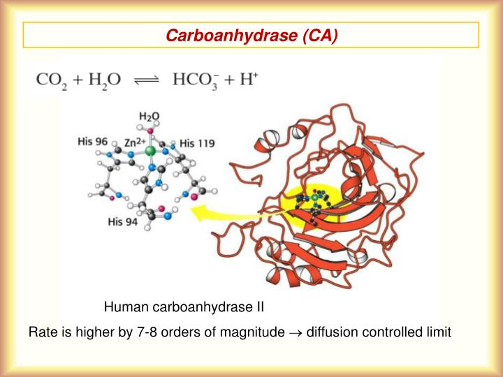 Carboanhydrase