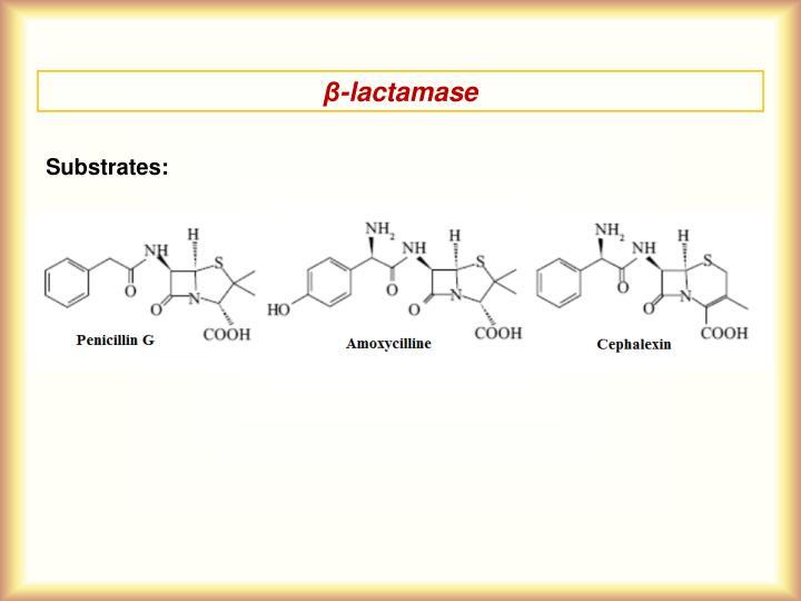β-lactamase