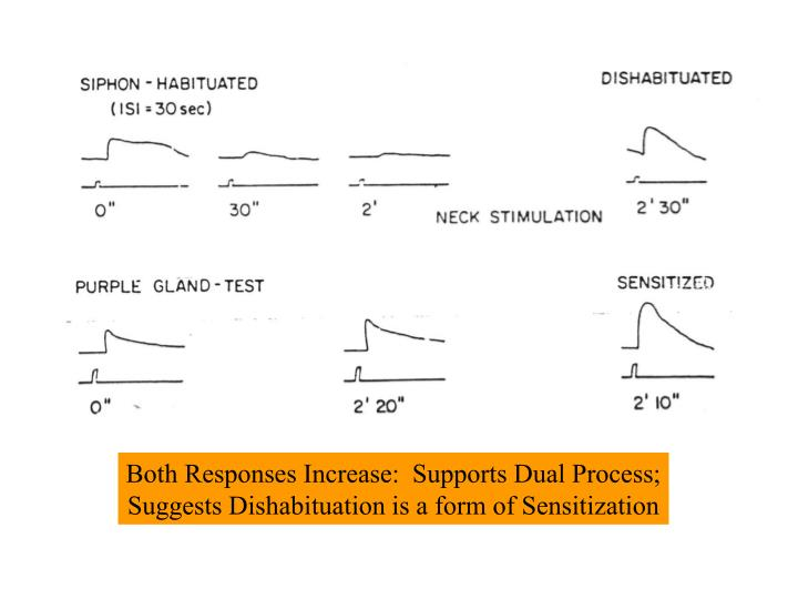 Both Responses Increase:  Supports Dual Process;