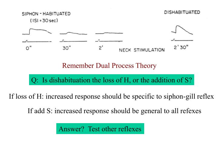 Remember Dual Process Theory